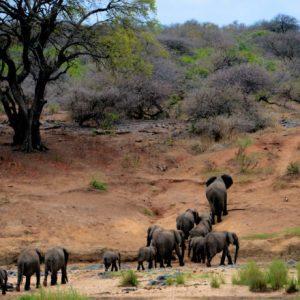 wild soul safari by Kuunganisha